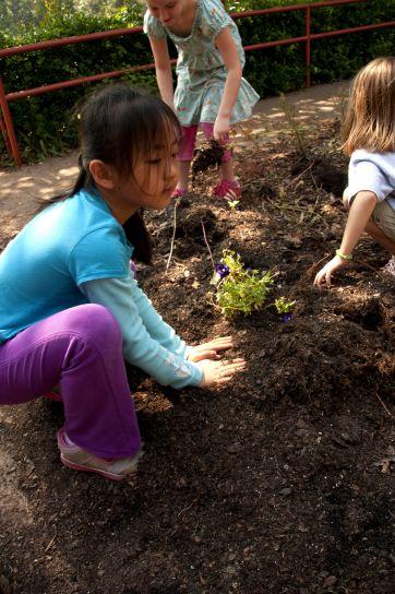 planter des fleurs, des légumes, école, jardin
