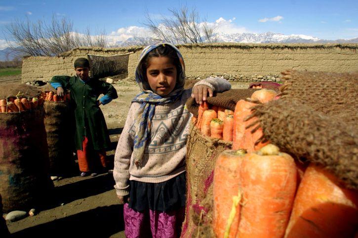 programy, Afghanistans, rolnych, upraw, produkcji