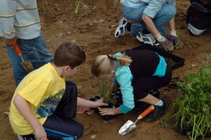 Studenten bereiten, Pflanzen