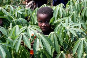 young boy, stands, thriving, cassava, field, Democratic republic Congo