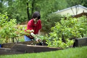 wearing, protective, gloves, boy enjoying, fresh, outdoor, air, planting