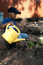 young, African American, school boy, watering, planted flowers