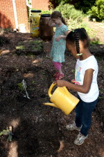 young, African American, school girl, watering, planted flowers