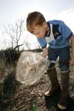 jeune garçon, les prises, les poissons, net