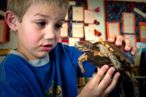 young boy, holding, box, turtle, portraying, look, wonderment, mixed, curiosity
