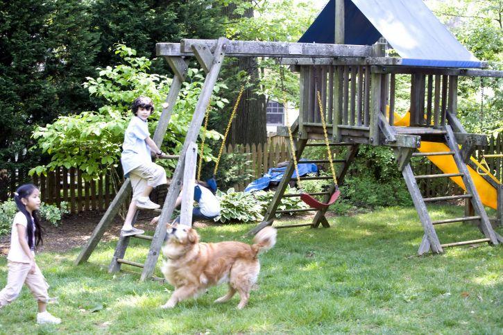 children, playground, play, cute, dog