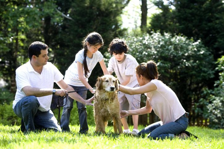 children, washing, dog, outside