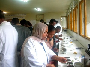 Kaffee, Verkoster, feilen, Fähigkeiten, Kaffee, Seminar