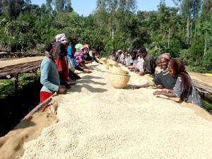 커피, 노동자, Ehiopia, 아프리카