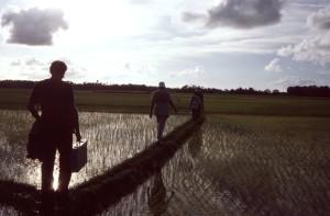 passage, le riz, rizières, homme, terre, ponts