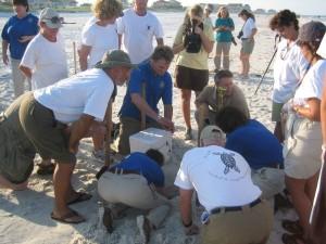 foule, formés, mer, tortue, volontaires, regarder