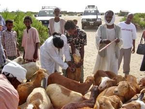 Tier, Tierhaltung, Programme, Vieh, Gesundheitswesen, auf dem Land, Ziege, farmerd