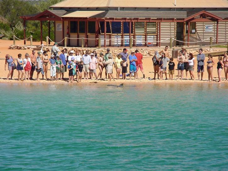 crowd, feeding, dolphins