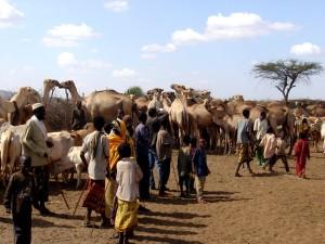de Etiopía, camellos