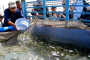 euphrates, poissons, ferme