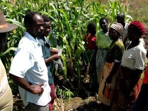 Malawi, Africa, people, crops, corn, field