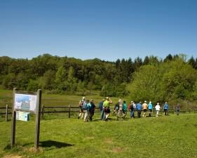 hikers, green, fields