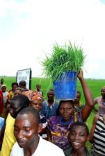 Nigéria, hospodárstva, rastu, ryža, poľnohospodári