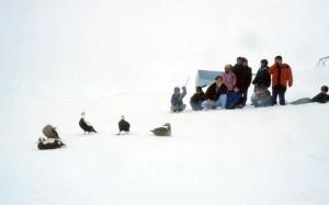 peole, foule, regardant, les anciens, les canards, la neige