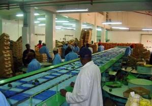 el procesamiento, el aguacate, la exportación