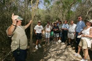 talks, visitors, bird, living, tree