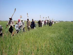team, Iraakse, werknemers, hoofden, velden, werk