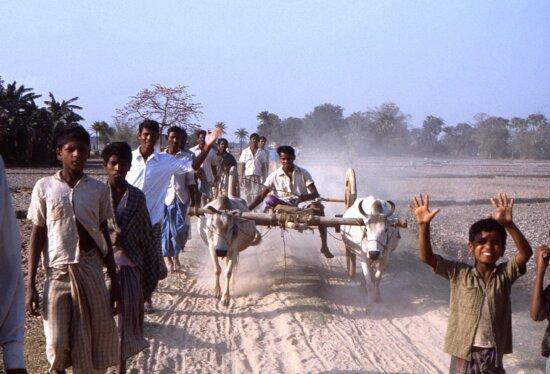 walking, Bengali, men, boys, country, Bangladesh