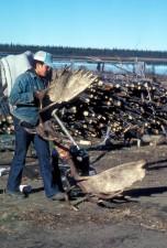 zamestnanca, platí, moose, parohy