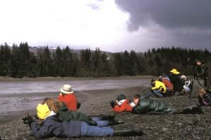 environmental, education, students, viewing, shorebirds