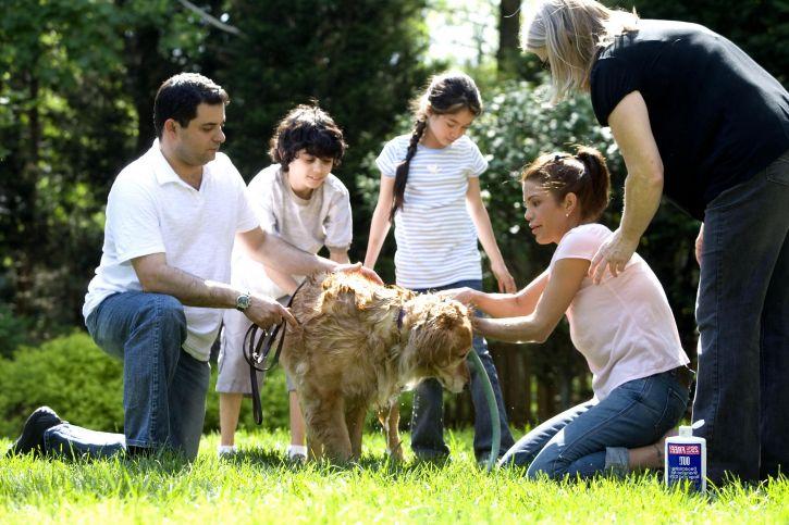familie, masina de spalat, câine, înapoi, curte