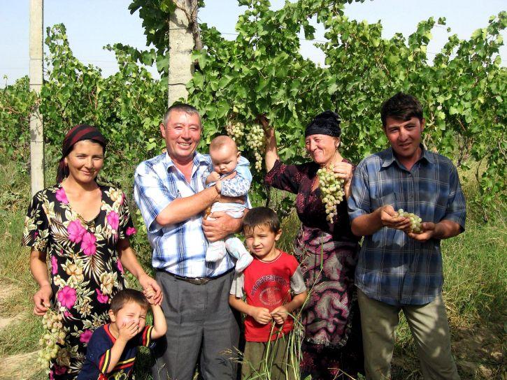 boer, familie, genieten, oogst, druiven, rayon, Namangan, Oblast, Oezbekistan