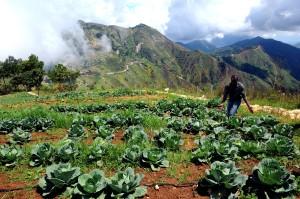 farmers, agricultural, training, program, Haiti