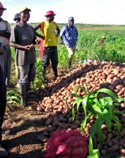 farmers, Huambo, Angola, received, loans, production