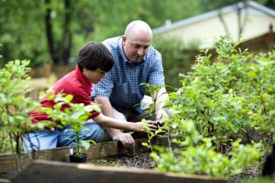 father, son, outdoor, activity, home, grown, food