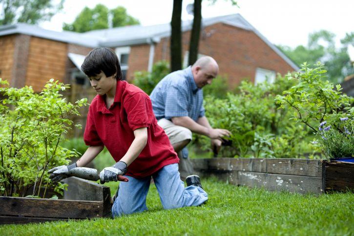 father, son, fertilizing, garden