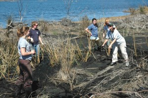 gruppen, kvinner, frivillige, hjelpe, plante, myr, gress, tilflukt