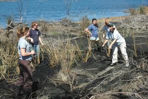 group, women, volunteers, helping, replant, marsh, grass, refuge