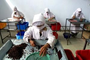 Afghanistan, l'Asie, les femmes, le travail