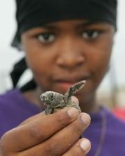 Afro amerikanske jente, nært hold, baby, loggerhead, skilpadde