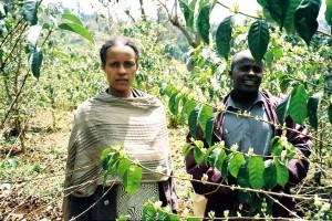 agriculteurs, urbain, fruits, verger, vérification, verger, arbres