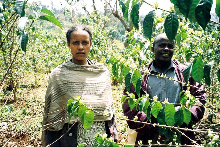 nông dân, khu đô thị, trái cây, vườn, kiểm tra, orchard, cây