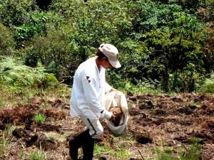 kvinne, bonde, Colombia, opplæring, landbruket, produksjon, business, utvikling