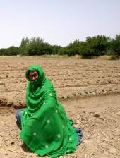 žena, tradičné, oblek, poľnohospodárstvo, pole, Murtad, Kilan, Balochistan, Pakistan