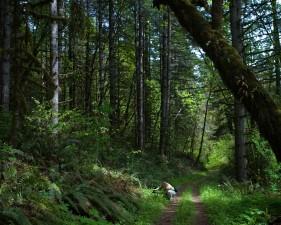 female, trail, wild, green, forest