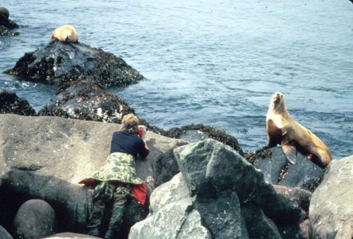 female, photographer, taking, photo, sea, lion