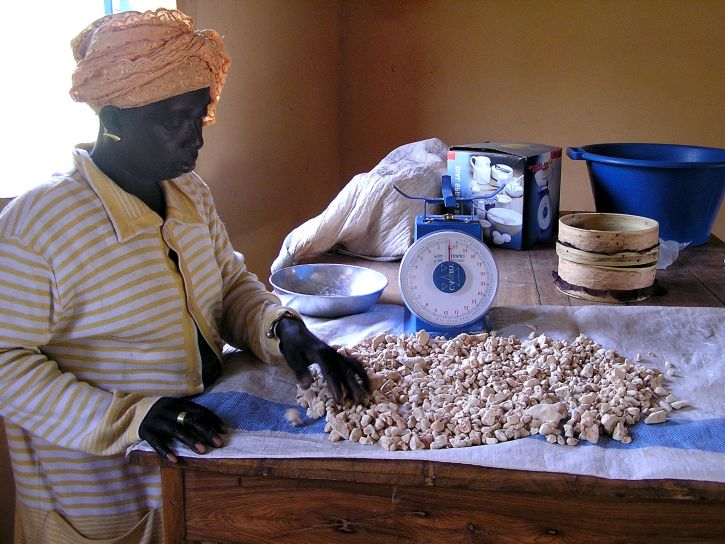 female, processes, baobab, fruit, kernels, powder, sale, Senegalese, capital, Dakar