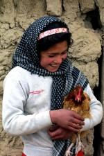 femme, lainage, en bonne santé, des poulets, marché