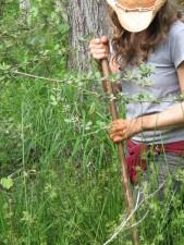 femelle, recherches, marais, tortues, forêt