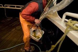 kvindelige, arbejde, båd