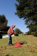 gathering, leaves, lawn, plastic, flexible, pronged, leaf, rake